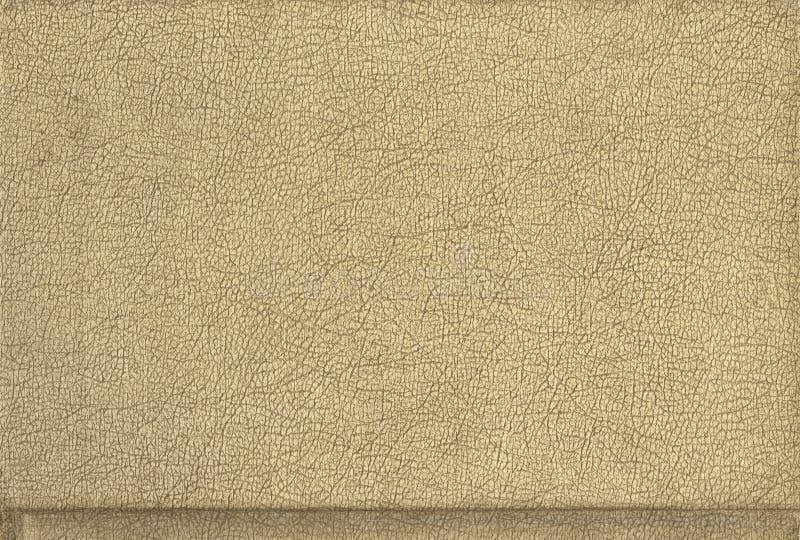 покрытый коркой tan кожи стоковое фото rf