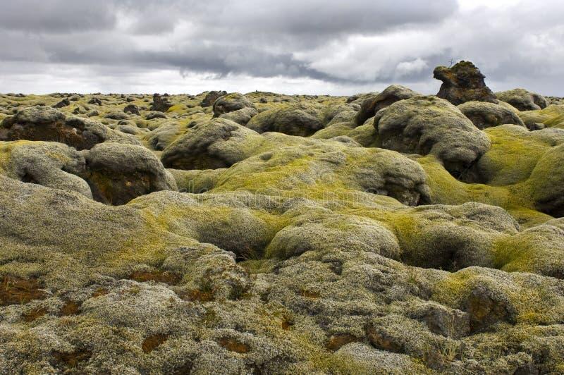 покрытый мох лавы поля стоковое фото