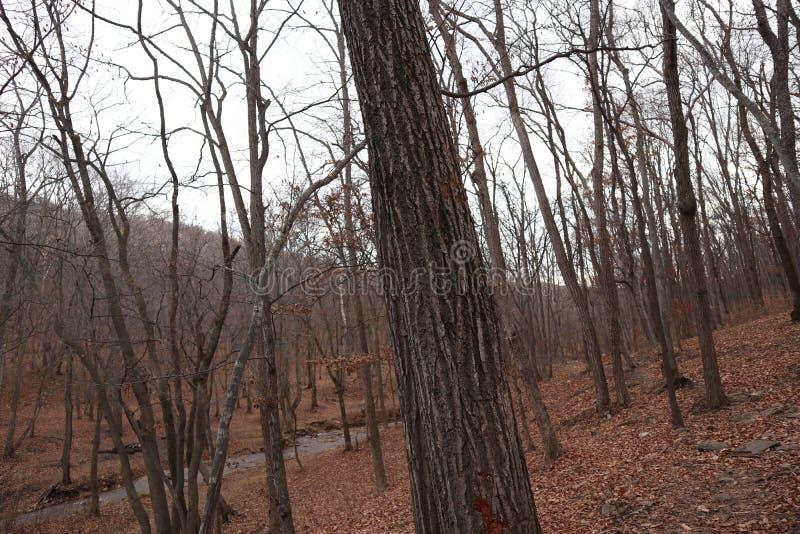 покрытый осенью упаденный ландшафт пущи земной выходит желтый цвет Природа в октябре Поток в пуще стоковые изображения