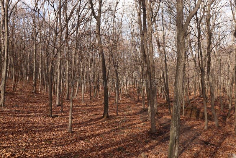 покрытый осенью упаденный ландшафт пущи земной выходит желтый цвет Природа в октябре стоковая фотография rf
