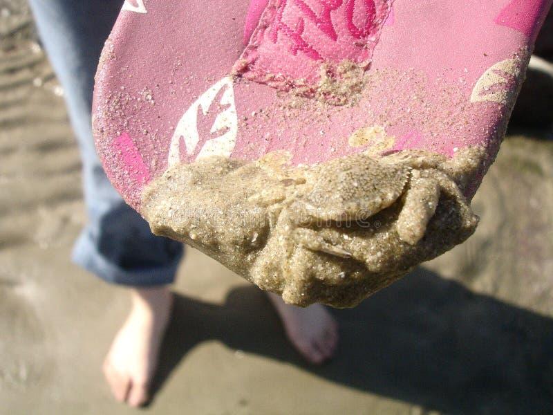 покрытый песок рака стоковое фото rf