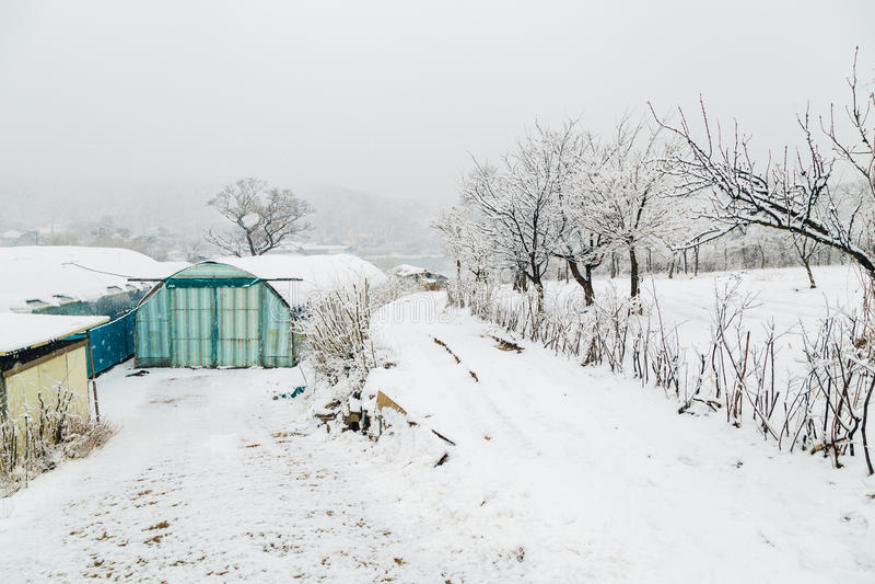 покрытый Снег парник стоковая фотография rf