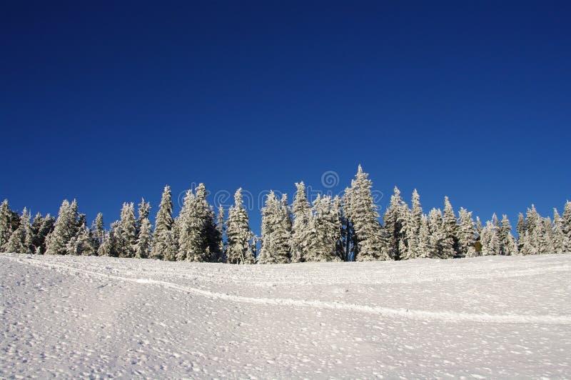 покрытый снежок горы стоковые фото