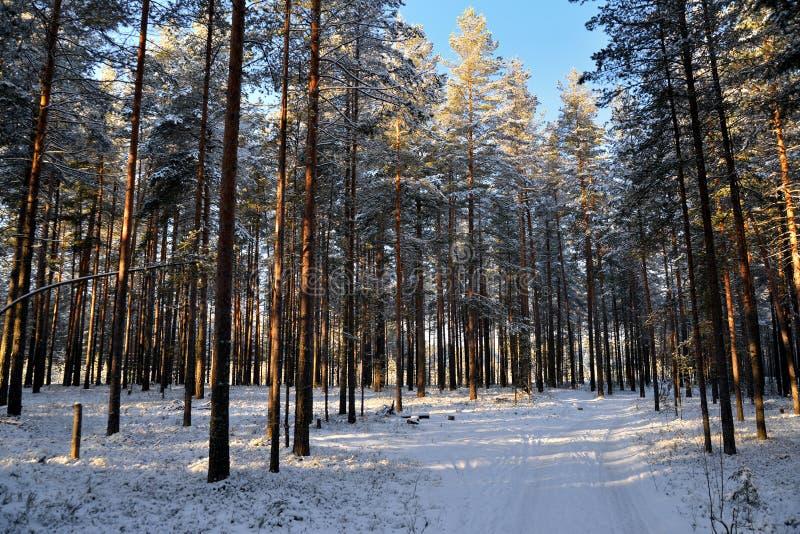 покрытый снежок дороги стоковое фото