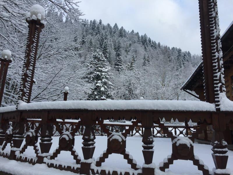 покрытый снежок парка стоковые изображения rf