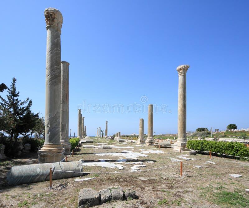 покрышка Ливана стоковые изображения