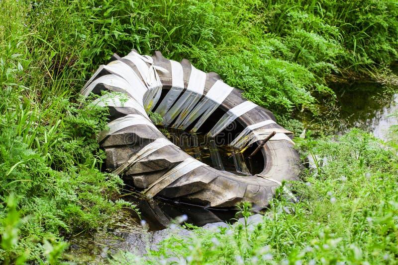 Покрышка сброшенная в лесе стоковые фото