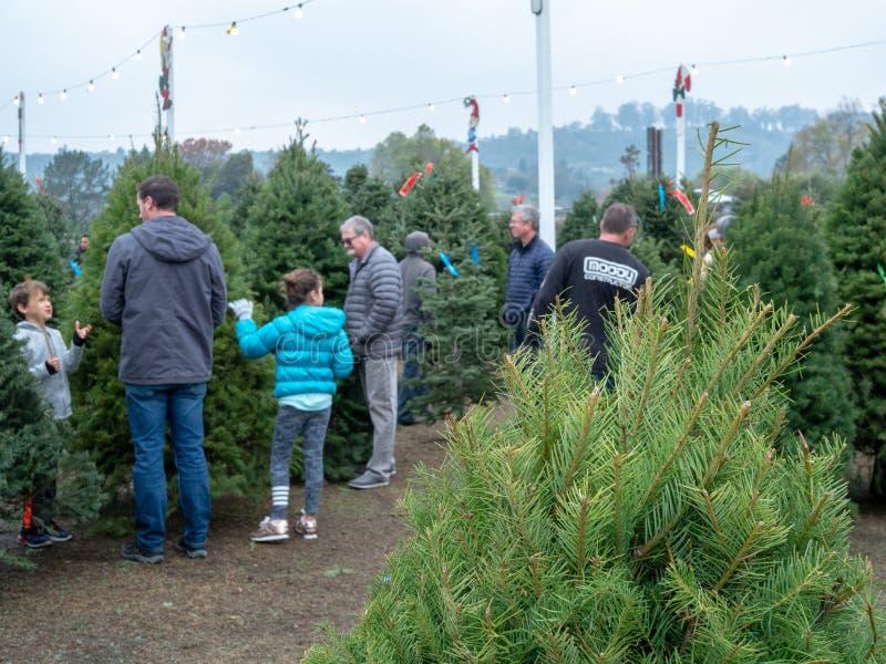Покупатели просматривают для естественных рождественских елок на рынке дерева Pronzini с деревом в переднем плане стоковое изображение rf