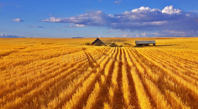 полдень Монтана осени солнечная стоковое фото
