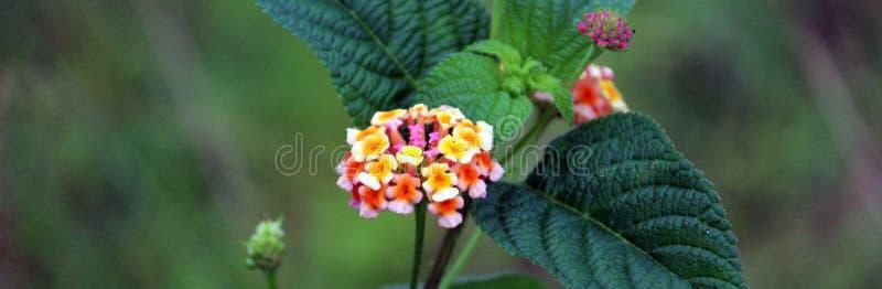 Полевой цветок в полях в bastar стоковая фотография rf