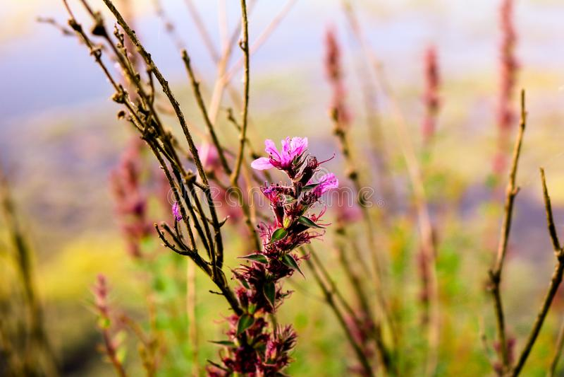 Полевой цветок с водой на заднем плане стоковое изображение rf