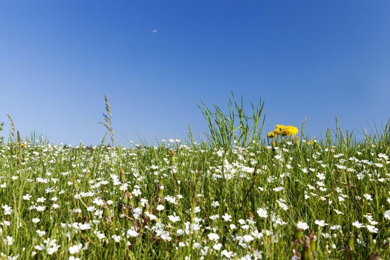 Полевые цветки в мае стоковое фото rf