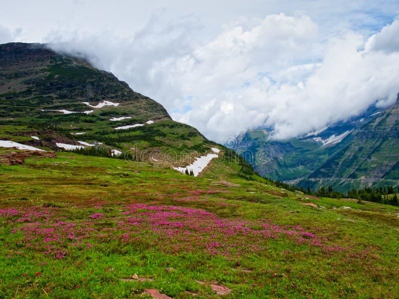 Полевые цветки в пропуске Logan, национальном парке ледника стоковое фото rf