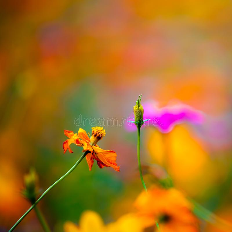 Полевые цветки в Yangshuo Китае стоковые фотографии rf