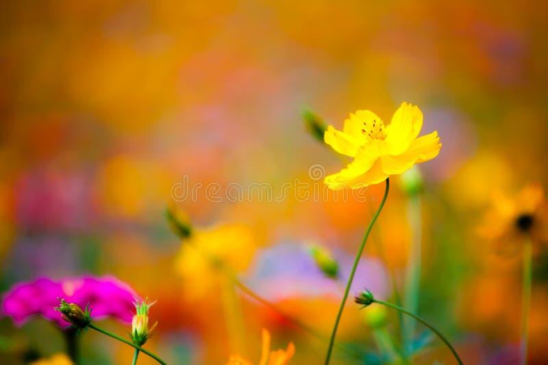 Полевые цветки в Yangshuo Китае стоковое изображение rf