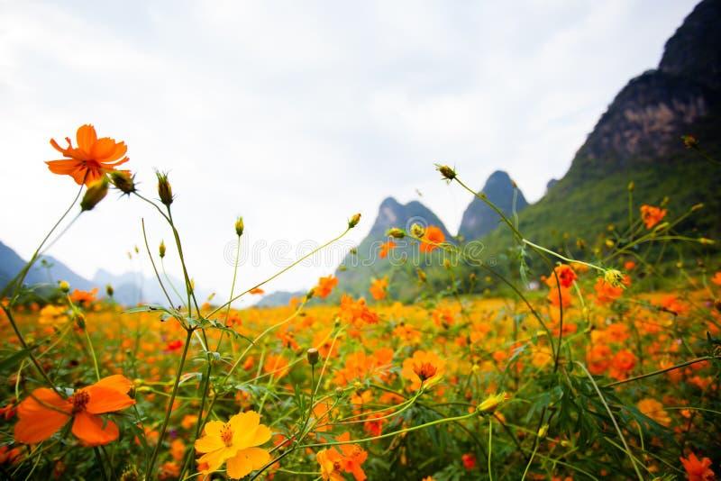 Полевые цветки в Yangshuo Китае стоковое изображение