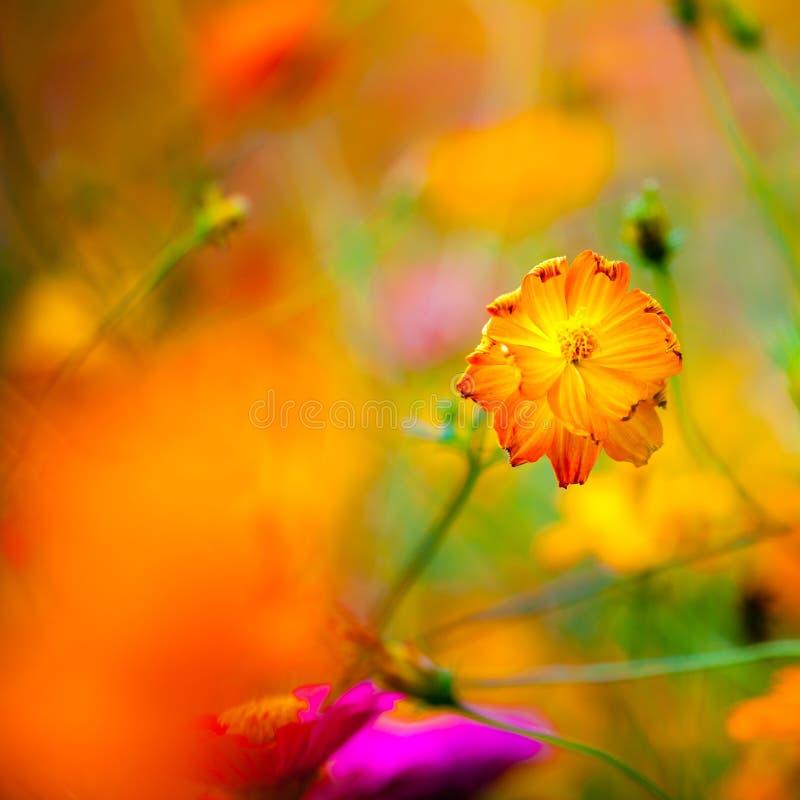 Полевые цветки в Yangshuo Китае стоковые изображения