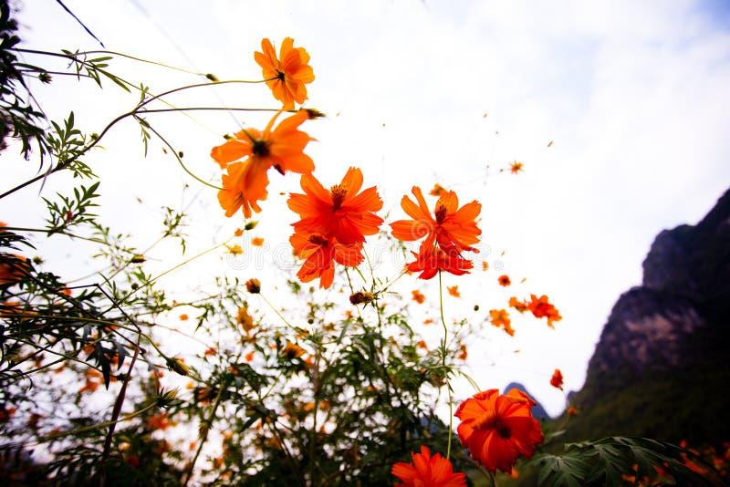 Полевые цветки в Yangshuo Китае стоковые фото