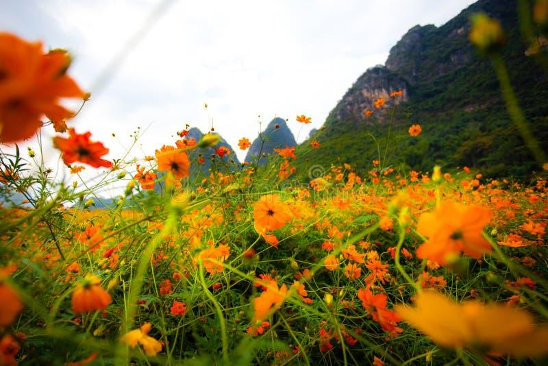 Полевые цветки в Yangshuo Китае стоковые изображения rf