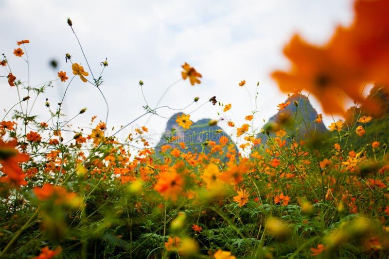 Полевые цветки в Yangshuo Китае стоковое фото rf