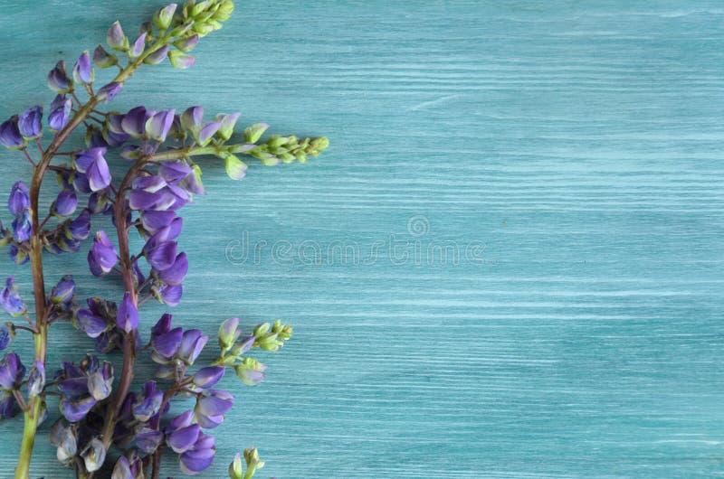 Полевые цветки закрывают вверх по предпосылке с космосом экземпляра для текста стоковое фото rf