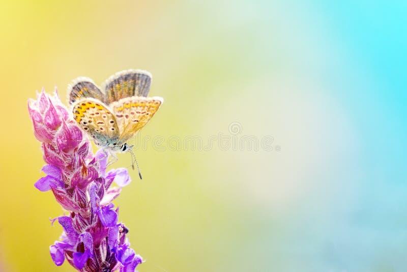 Полевые цветки и бабочка в луге в природе в лучах солнечного света летом Конец-вверх стоковые изображения rf