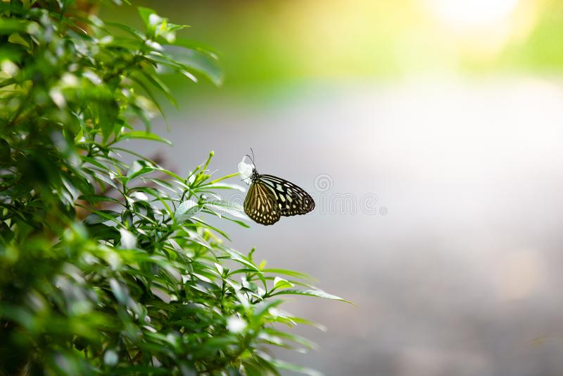 Полевые цветки клевера и бабочки в луге в природе в th стоковые изображения rf