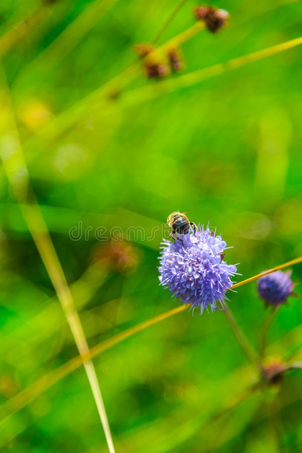 Полевые цветки на горах в летнем дне стоковые фотографии rf