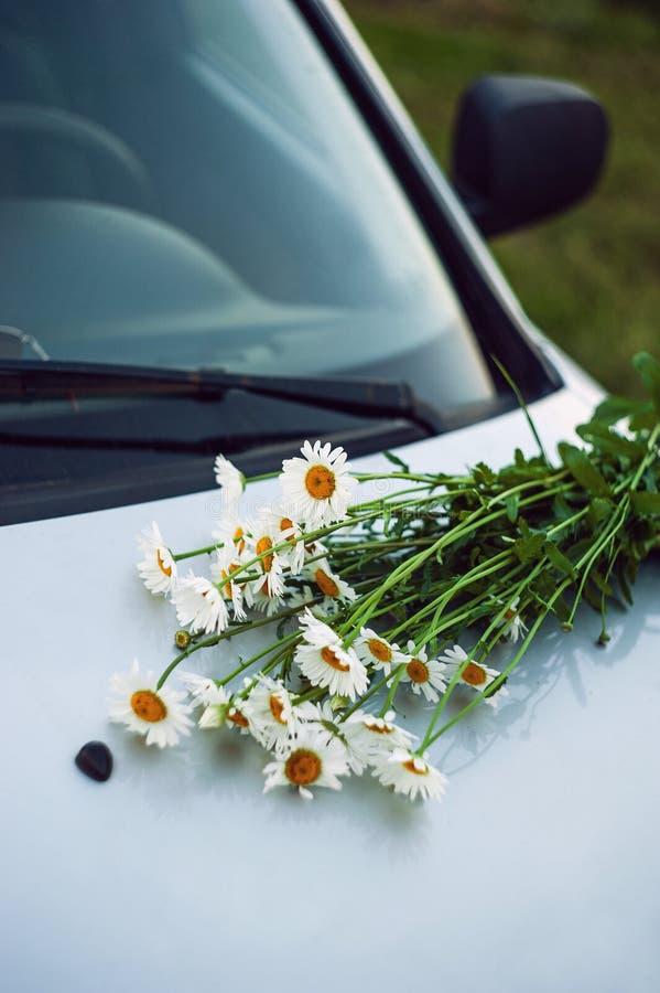 полевые цветки на клобуке автомобиля стоковые изображения rf