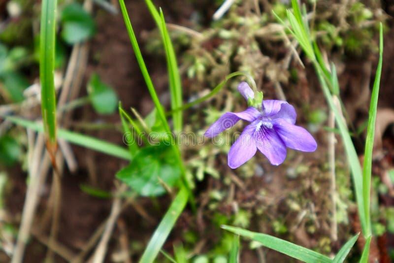 Полевые цветки на пасмурный день стоковое изображение rf