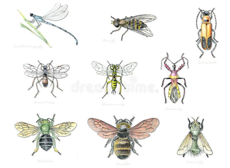 Полезные насекомые 2 сада иллюстрация вектора