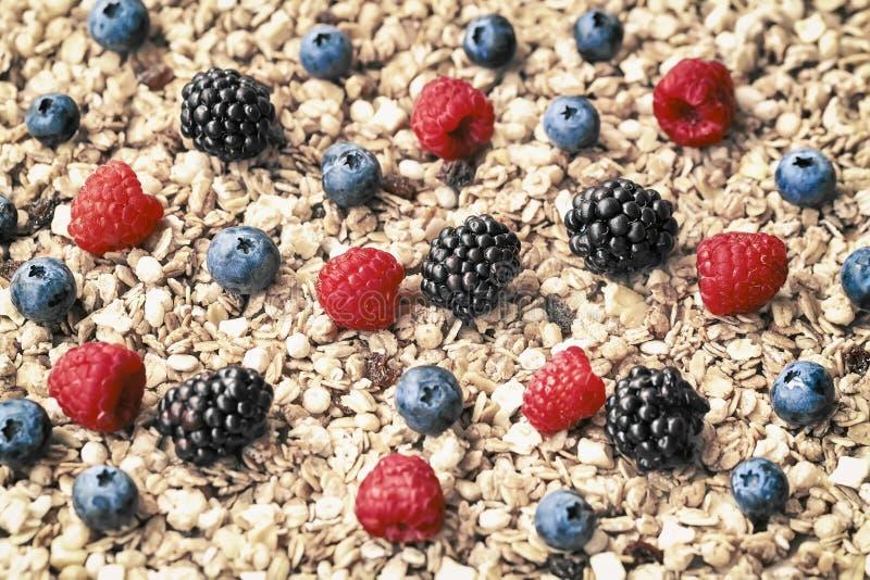 Поленика, голубики, ежевики на предпосылке muesli, овса шелушится, granola Здоровый завтрак, правый образ жизни стоковые фотографии rf