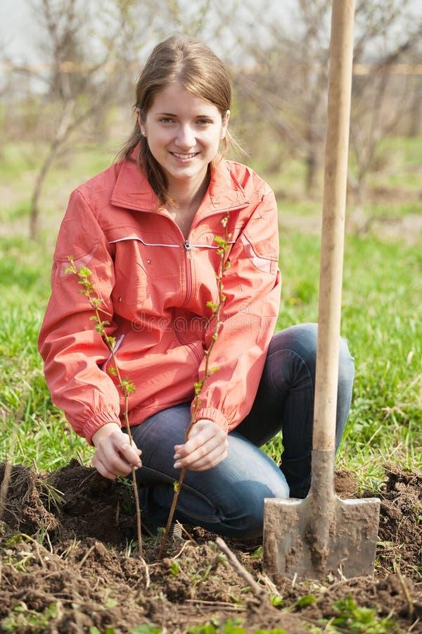 поленика женщину ростков стоковое фото