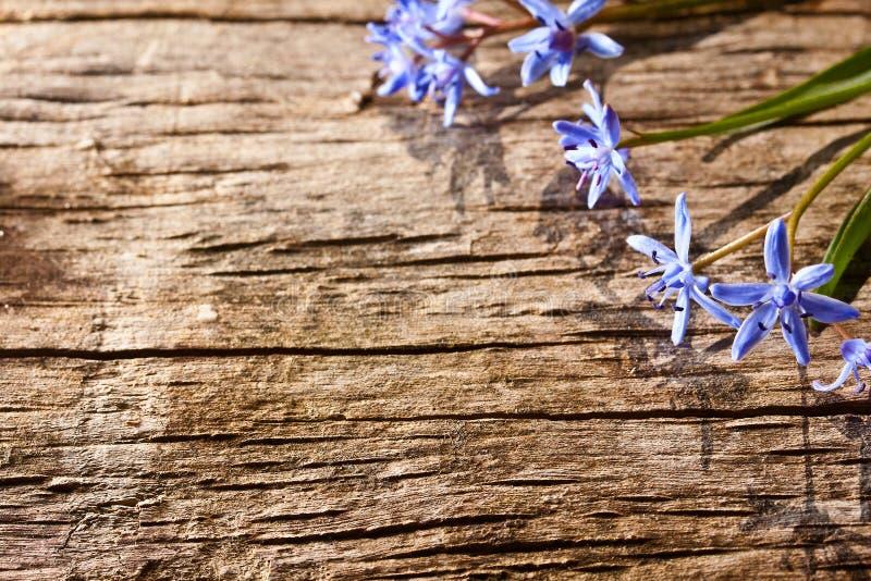полесье весны цветков стоковые фото