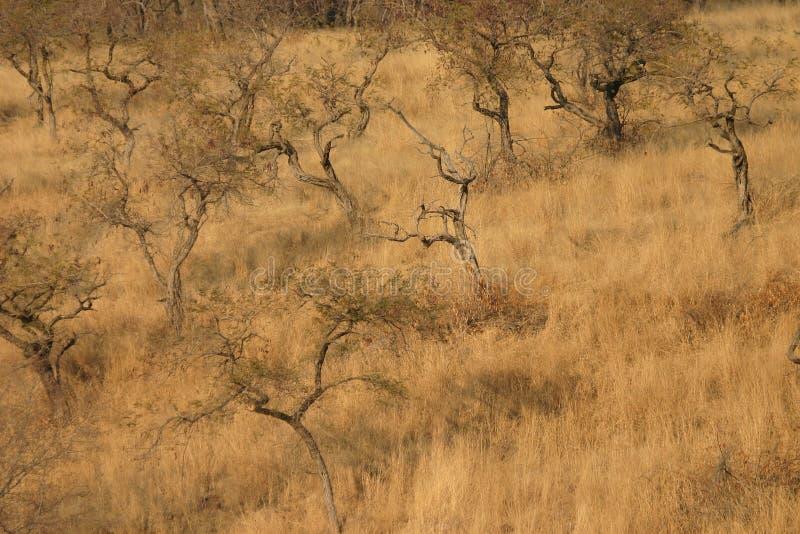 полесье саванны ландшафта стоковое фото rf