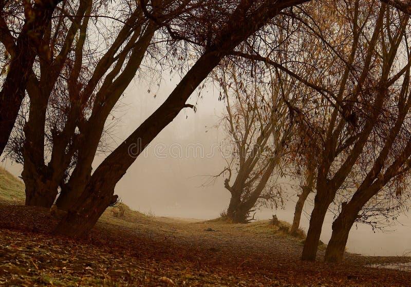 полесье тумана стоковое изображение rf