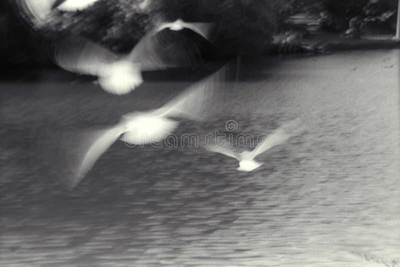 полет птиц стоковое фото rf