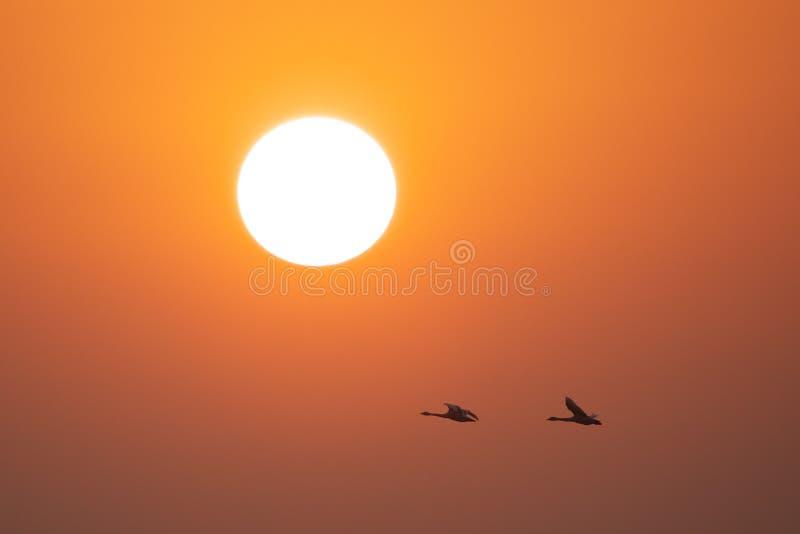 полет стоковая фотография rf