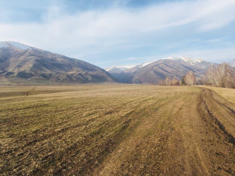 Поле весны в горах Altai стоковые фото