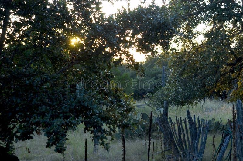 поле вечера стоковое фото