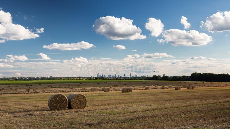 Поле в поздним летом перед горизонтом Франкфурта стоковые фотографии rf