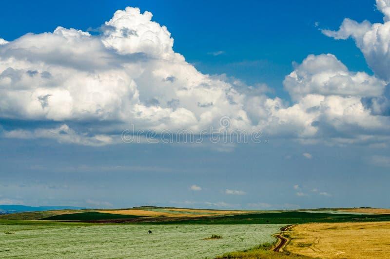 Поле в Yambol, Болгарии стоковое фото rf