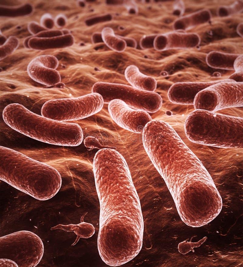 поле глубины бактерий стоковое фото rf