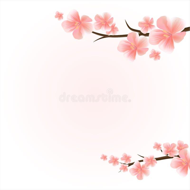 поле глубины яблока цветет отмелый вал Ветви Сакуры с цветками Ветви вишневого цвета на светлом - розовая предпосылка вектор иллюстрация штока