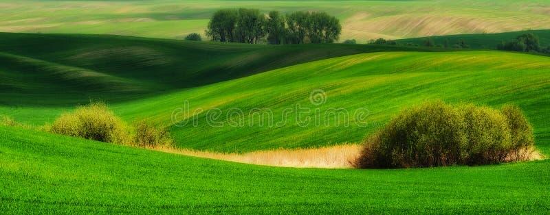 Поле голубая пасмурная весна неба утра зеленого цвета травы поля ...