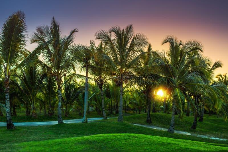 Поле для гольфа в сельской местности Пляжный комплекс Punta Cana, Доминиканская Республика стоковое фото