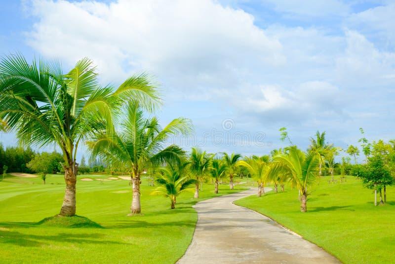 Поле для гольфа с путем и кокосовой пальмой тележки зеленой травы стоковые фотографии rf
