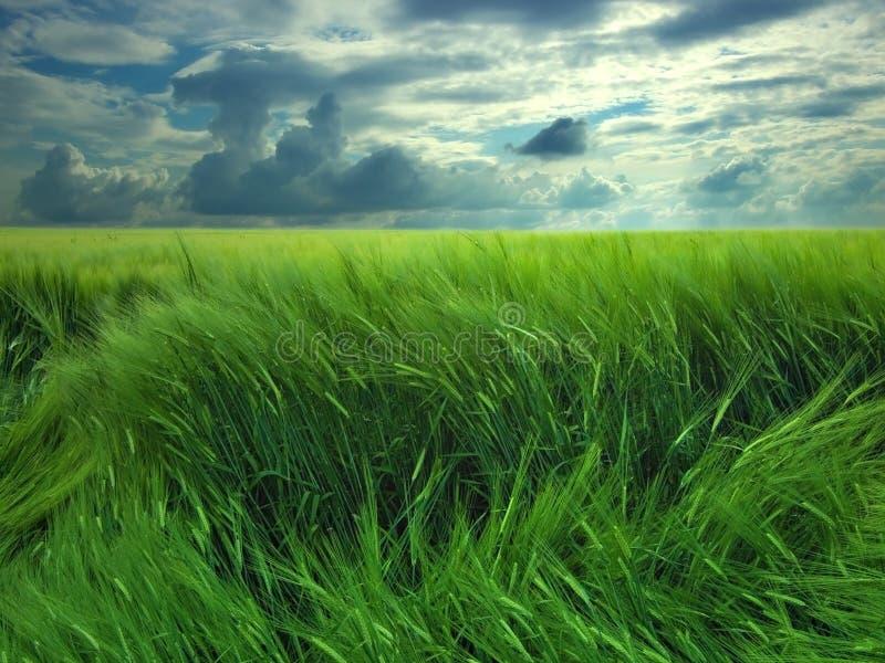 поле дня ветреное стоковое фото rf