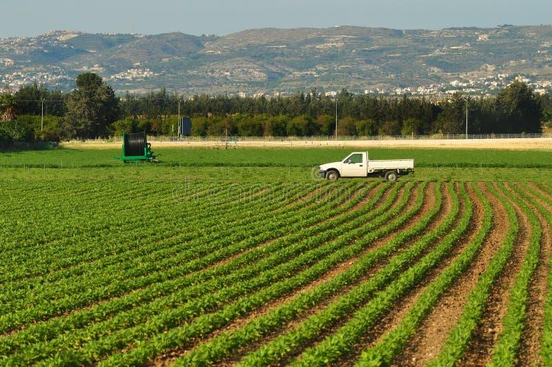 Поле зеленого урожая в Кипре стоковая фотография