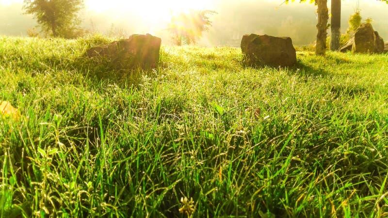 Поле зеленой травы Осень прерии Bashang стоковые изображения rf